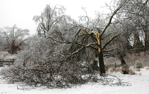 Dealing With Ice Damaged Trees North Carolina