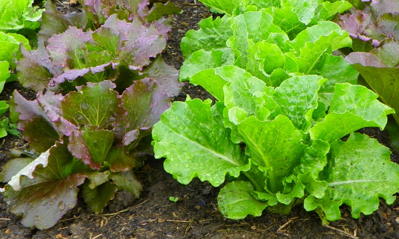 Easy Vegetables and Herbs for Beginners | North Carolina ...  Easy Vegetables...