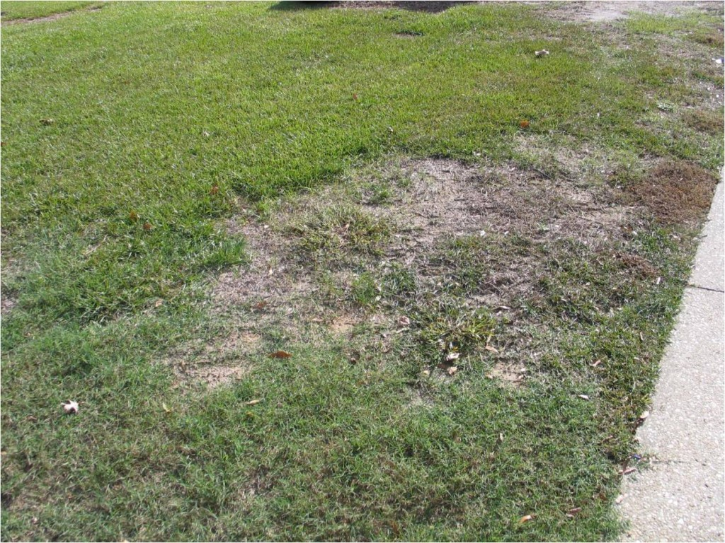 What Is Killing My Lawn North Carolina Cooperative