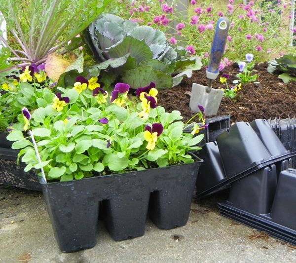 Recycling plastic plant pots and containers north carolina cooperative extension - Recycled containers for gardening ...