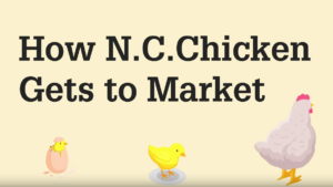 Title screen with text How N.C. Chicken Gets to Market