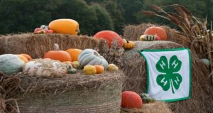 """Fall"" into 4-H Hay Bale Decorations"