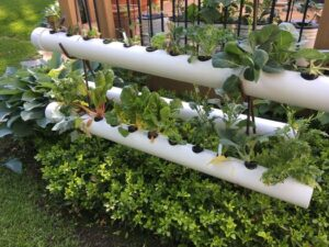 Cover photo for Hydroponic Gardening
