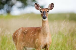 Cover photo for Deer Resistant Plants